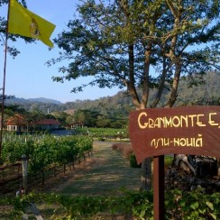 Granmonte Winery Thailand