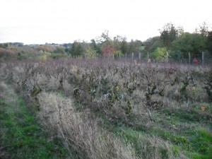 Ekologiczna uprawa u Jean-Pierre'a Robinota.