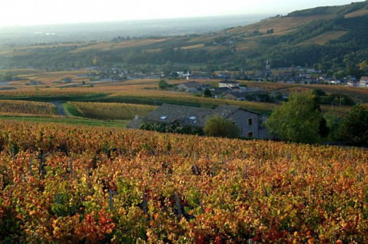 Beaujolais w okresie winobrania