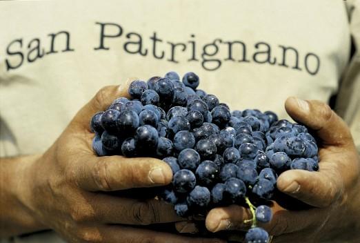 Winogrona z San Patrignano.