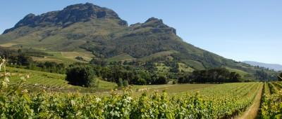 Winnice w RPA – Stellenbosch. © Erica Moodie / WOSA.