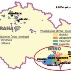Region winiarski Morawy. Archiwum autora.