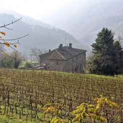 Wysoko położona winnica Villa Papiano. © Krzysztof Dobryłko.