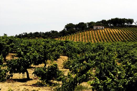 Alenteżańskie winnice. © Vinhos do Alentejo.