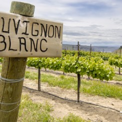 sauvignon blanc sign