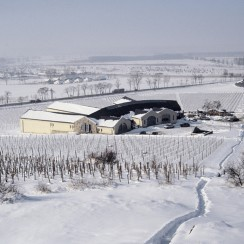 Coraz bliżej święta! Winnica Disznókő zimą. © vintuswines.com.