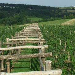 Widok - także na charakterystyczną pergolę na winnicy. © Polomia.pl.