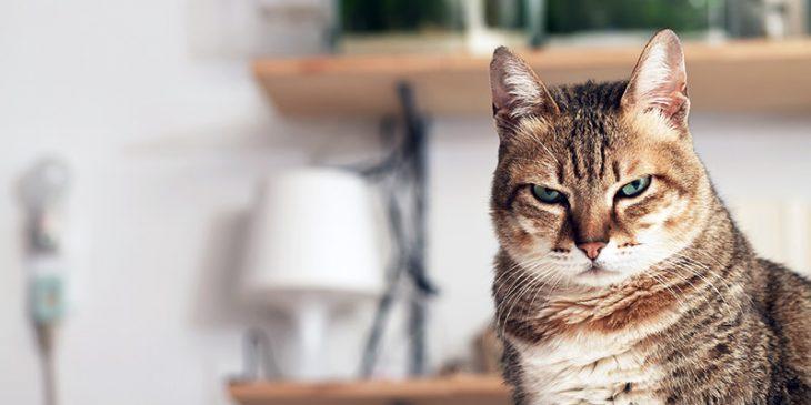 Kot w Sauvignon Blanc jest już passé.